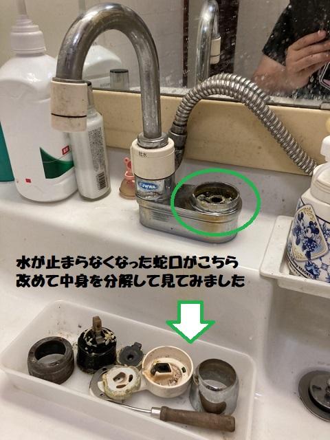 【画像】蛇口調査